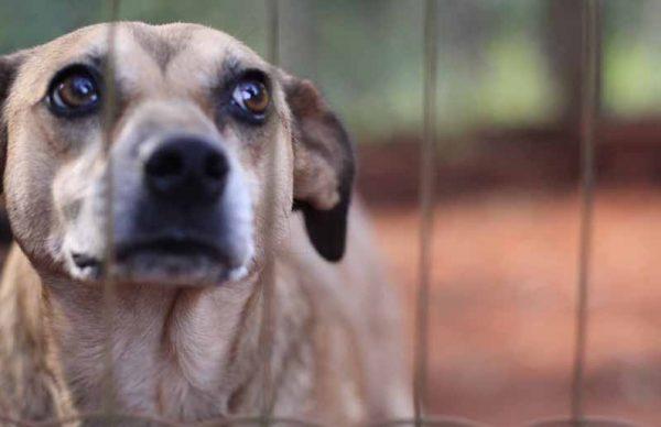 Animais abandonados à porta do canil: Câmara lembra que maus tratos a animais são crime