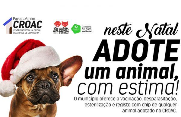 """""""Neste Natal, adote um animal com estima!"""" Mas não se esqueça que é um presente para a vida toda"""