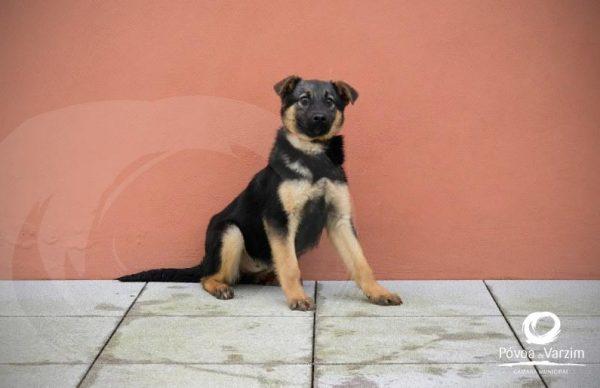 Conheça os animais para adoção disponíveis no CROAC