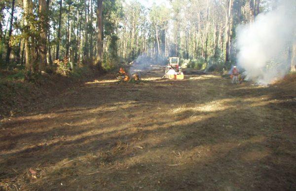 """Operação """"Floresta Viva"""" – acção ambiental decorre no domingo"""