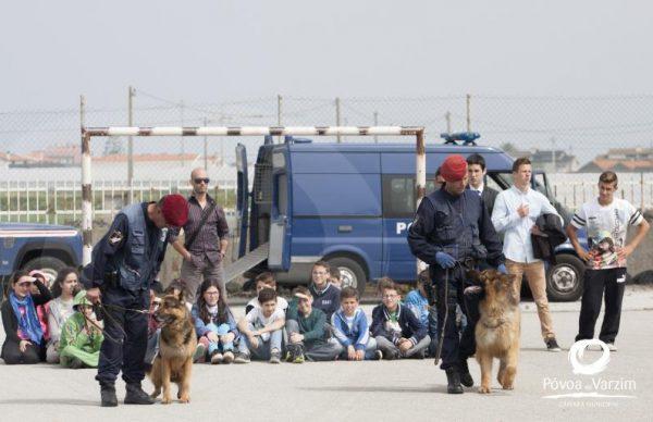 Demonstração do Grupo Cinotécnico da Polícia de Segurança Pública