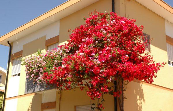 Galeria imagens do Concurso Janelas, Varandas e Jardins Floridos 2006