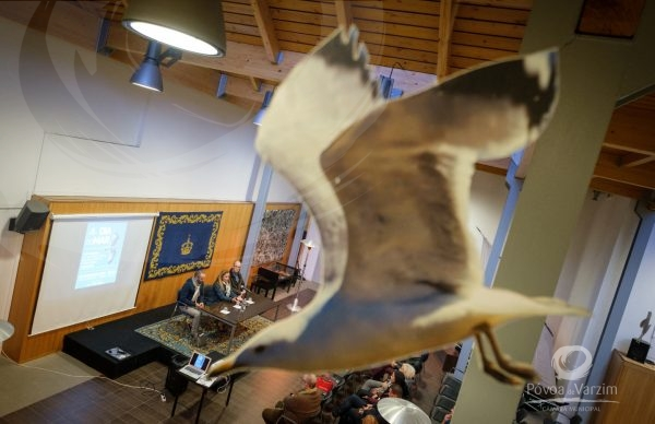 Museu assinala Dia do Mar com reflexão acerca da alteração de hábitos das gaivotas