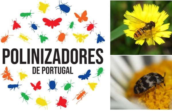 Ajude a descobrir os polinizadores de Portugal