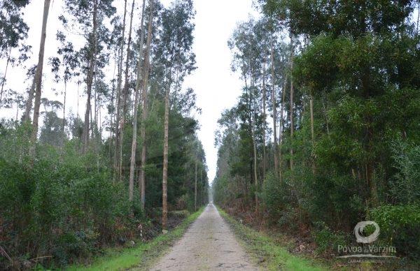 Limpeza de Terrenos Florestais até 15 de março