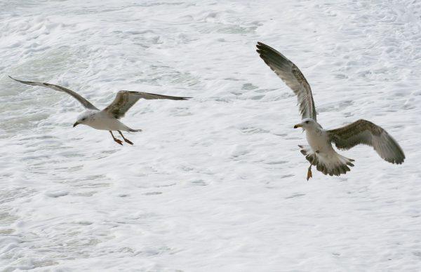 Plano de ação para o controlo das gaivotas – Colabore!