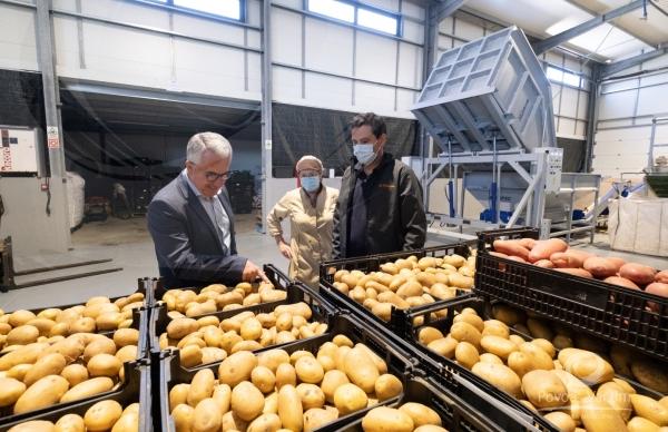 Empresário poveiro recupera cultura da batata em areia
